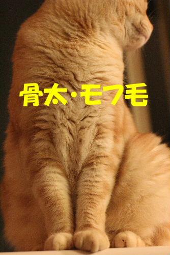 2011年10月ニキ3.JPG