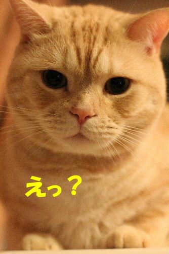 2011年10月ニキ4.JPG