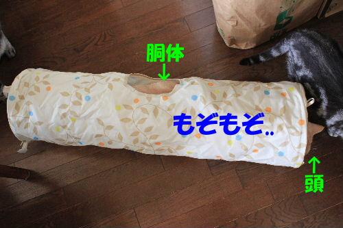 2011年10月モン3-2.JPG