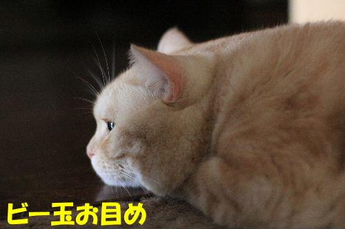 2011年10月変8.JPG