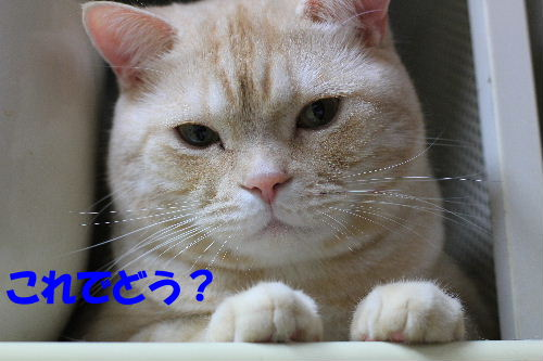 2011年10月水圭8.JPG