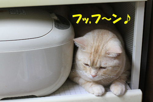 2011年10月水圭9.JPG