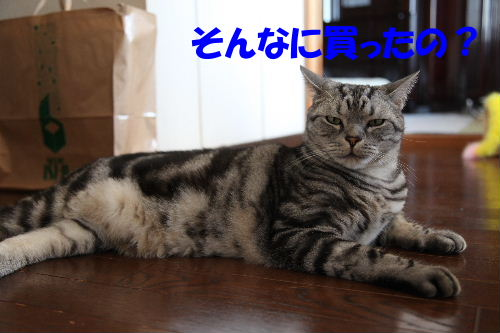 2011年11月タイ5.JPG