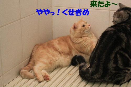 2011年12月お風呂1.JPG