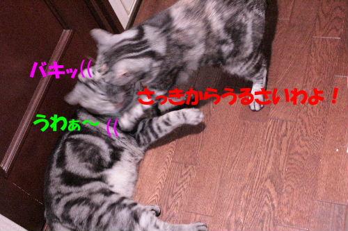 2011年12月お風呂2-4.JPG