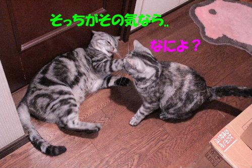 2011年12月お風呂2-5.JPG