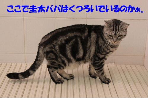 2011年12月お風呂3-3.JPG