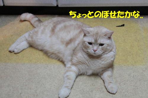 2011年12月お風呂3-4.JPG