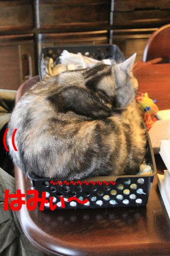 2011年12月くつ1-3.JPG