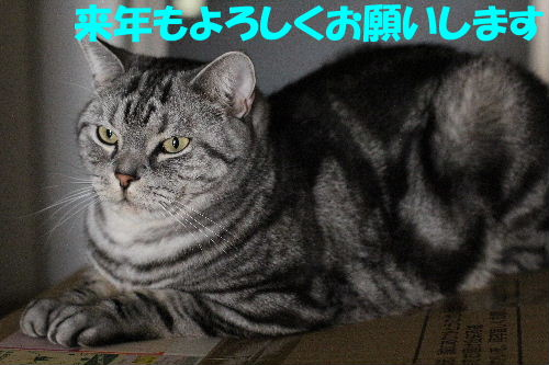 2011年12月くつ2-3.JPG