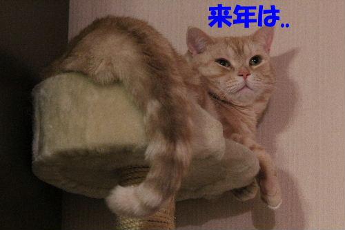 2011年12月くつ3-3.JPG