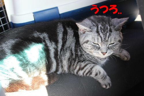 2011年12月くり3-2.JPG