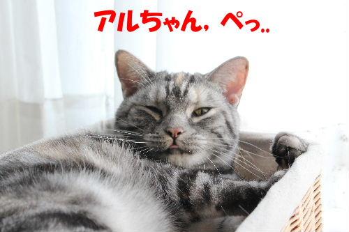 2011年12月すき2-5.JPG