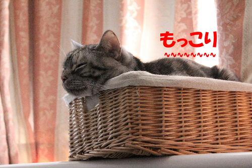 2011年12月すき3.JPG