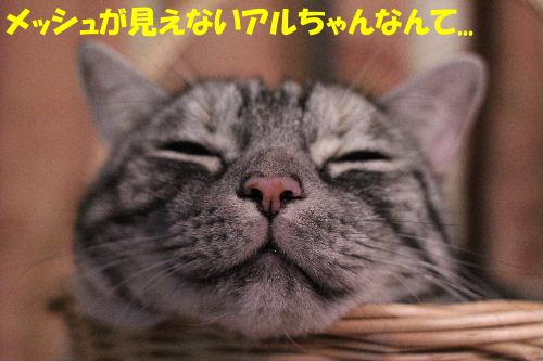 2011年12月まる4-3.JPG