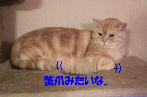 2011年12月コン3-2.JPG