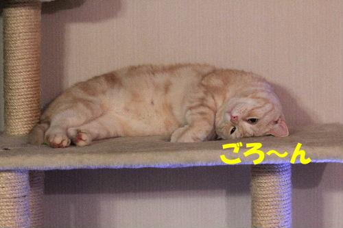 2011年12月コン4.JPG