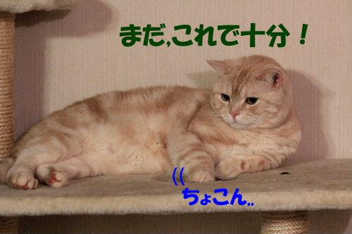 2011年12月コン4-4.JPG
