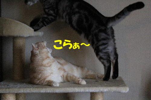 2011年12月ニケ1.JPG