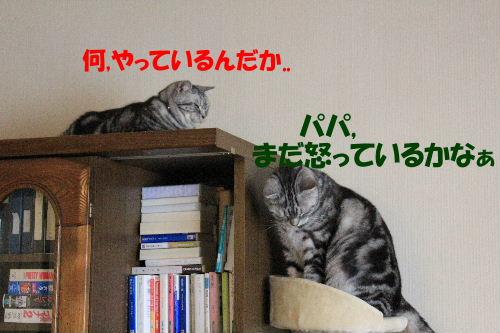 2011年12月ニケ1-3.JPG