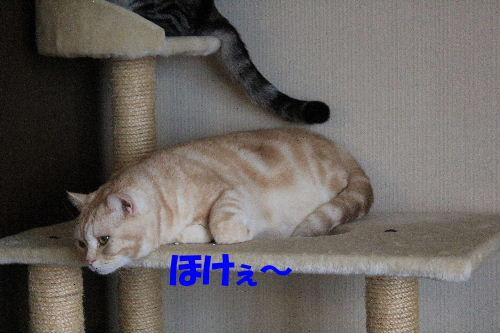 2011年12月ニケ1-5.JPG