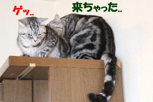 2011年12月ニケ2.JPG