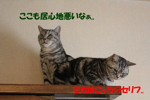 2011年12月ニケ2-4.JPG