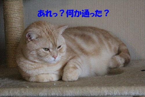 2011年12月ニケ5.JPG