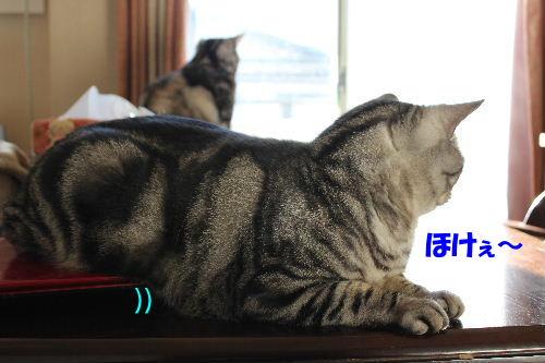 2011年12月不思議3-2.JPG