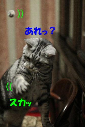 2011年12月不思議5-6.JPG