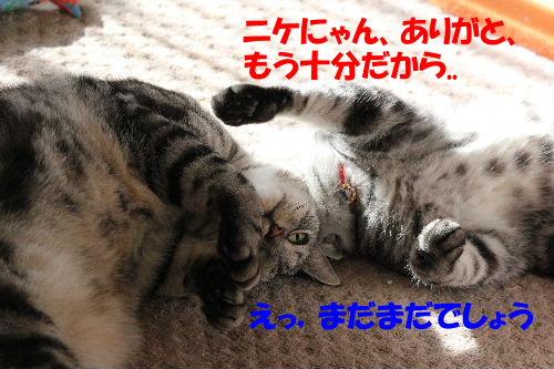 2011年12月光5.JPG