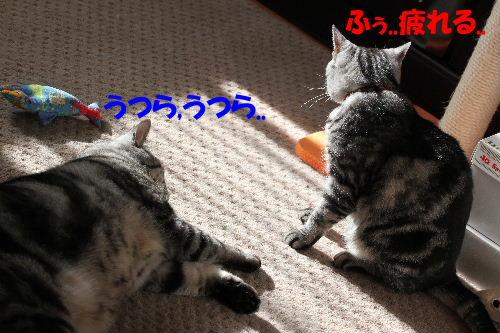 2011年12月光5-3.JPG