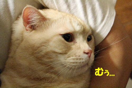 2011年12月抱っこ1.JPG