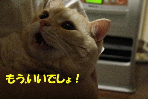 2011年12月抱っこ1-3.JPG