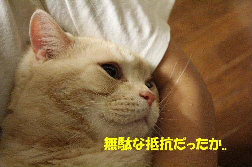 2011年12月抱っこ1-4.JPG