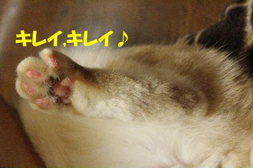 2011年12月抱っこ2.JPG