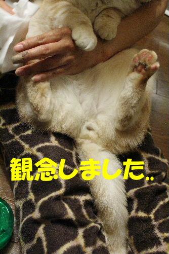 2011年12月抱っこ2-2.JPG