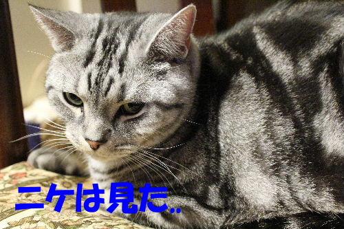 2011年12月抱っこ3-2.JPG