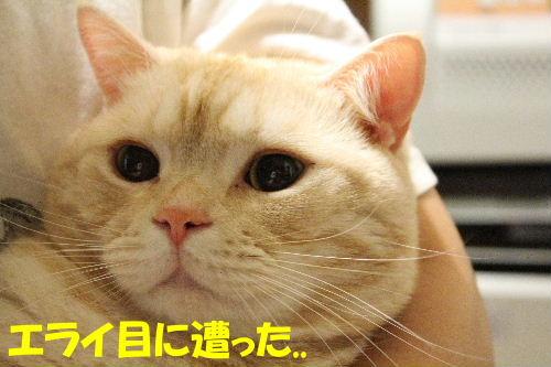 2011年12月抱っこ4.JPG