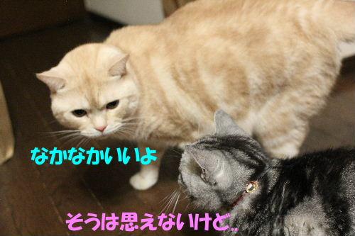 2011年12月敷く3.JPG
