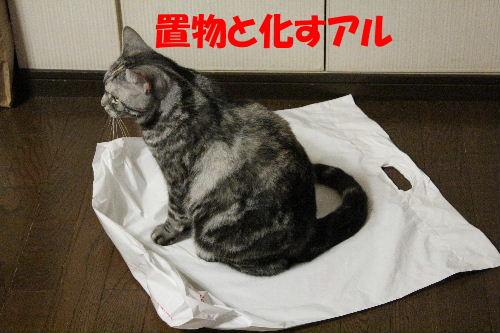 2011年12月敷く4-4.JPG