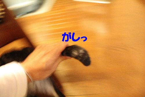 2011年12月近所4-2.JPG