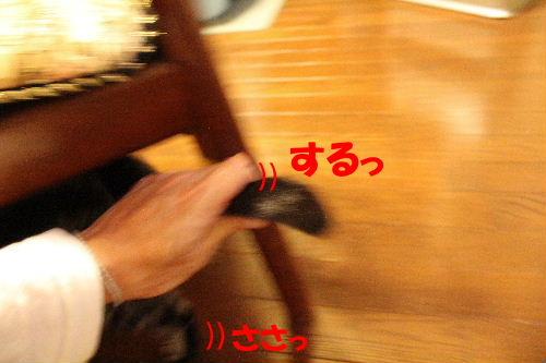 2011年12月近所4-3.JPG
