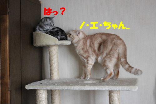 2011年1月お相手1.JPG