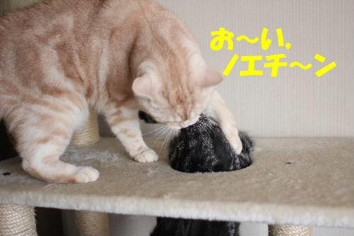 2011年1月お相手8.JPG