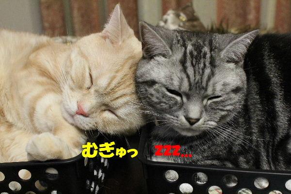 2011年1月夫婦2.JPG