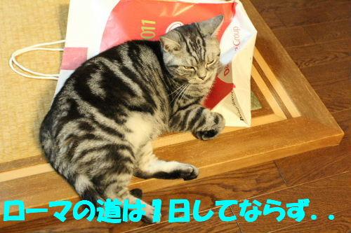 2011年1月福袋7.JPG