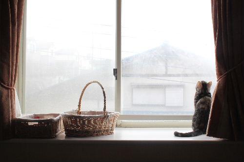 2011年2月雪4.JPG