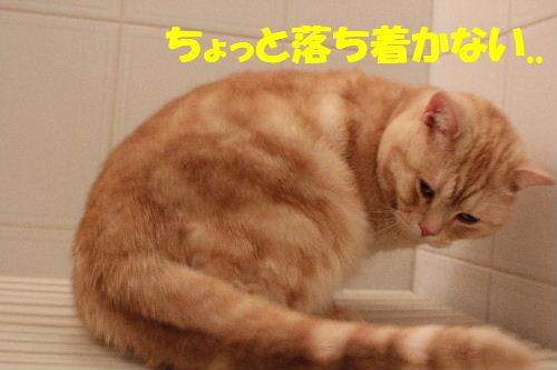 2011年4月お風呂場3.JPG
