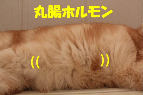 2011年4月お風呂場7.JPG